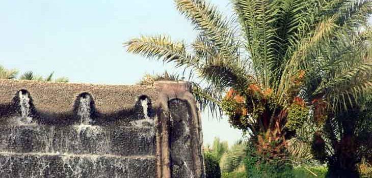 മുന്തിരിത്തോപ്പിലെ പ്രവാചകന്